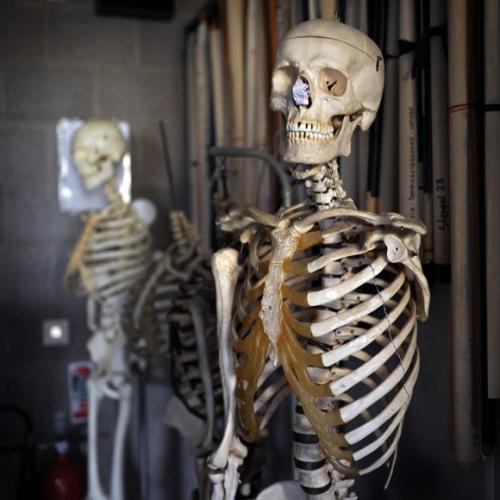 skeleton-580